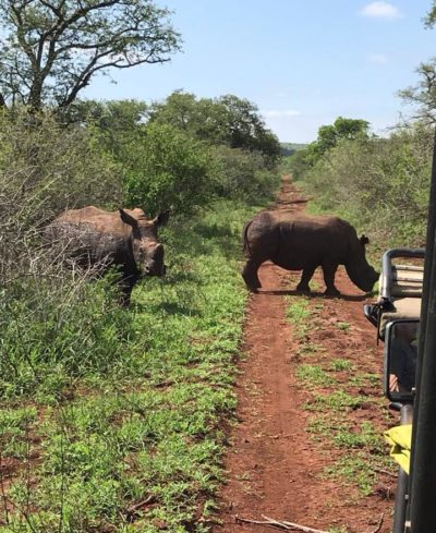 Luthuli Private Game Reserve in KZN